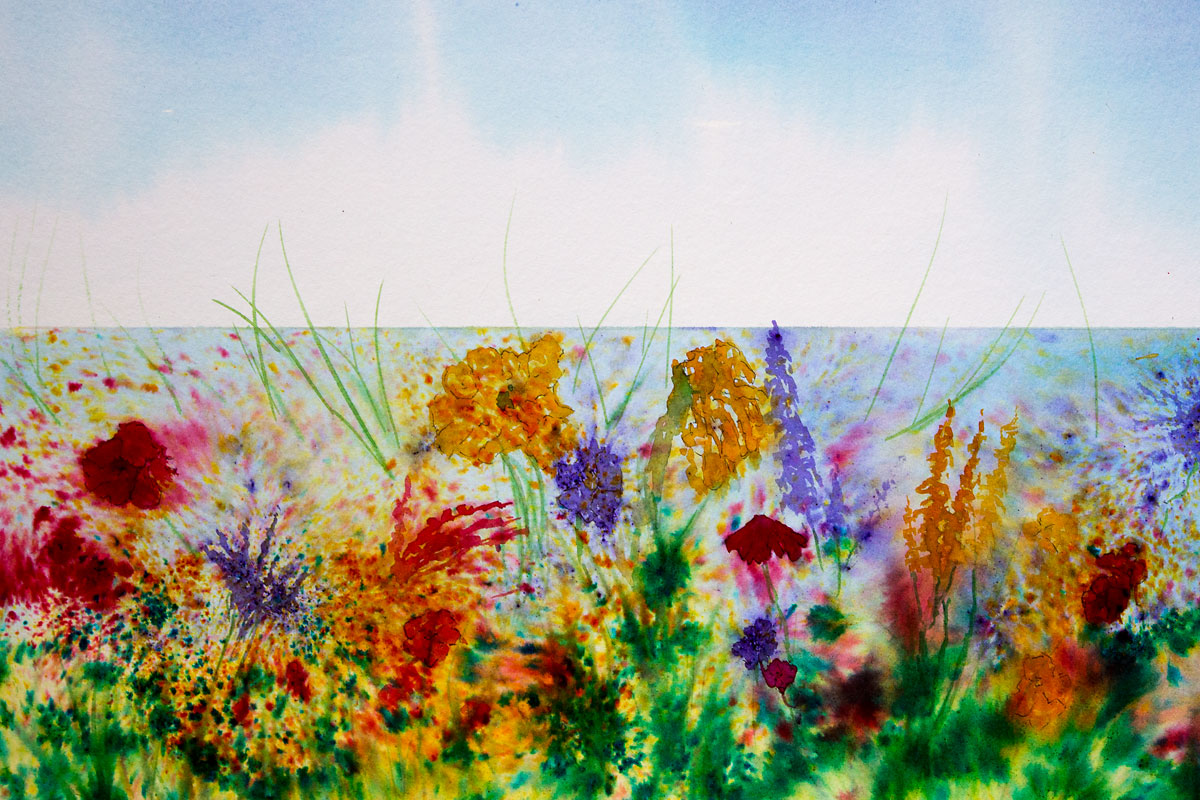 Original Brusho painting of the flowers of the Hebridean Machair